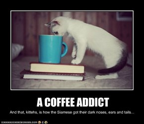 A COFFEE ADDICT