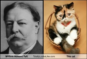 William Howard Taft Totally Looks Like This cat