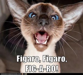 Figaro, Figaro,             FIG-A-RO!