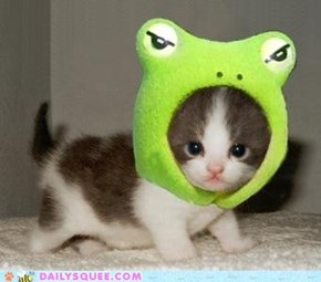 cyoot kitteh with froggy hat