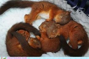 Snuggle fest