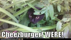 Cheezburger! WERE!