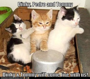 Dinky, Pedro and Tommy  Dinky & Tommy will come live with us!