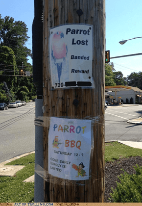 Lost Your Parrot? Check Out My BBQ