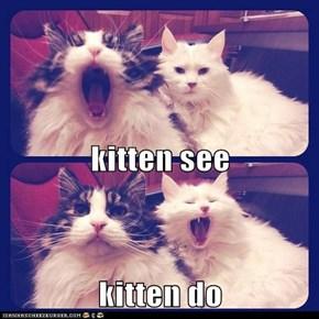 kitten see kitten do