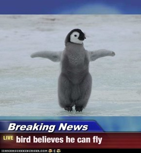 Breaking News - bird believes he can fly