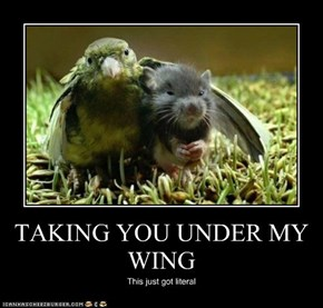 TAKING YOU UNDER MY WING