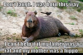 Don't laugh. I was born this way.  I can't help it if my father was a rat and my mother was a hippo.