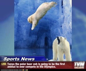 Sports News - Tanya the polar bear cub is going to be the first animal to ever compete in the Olympics.