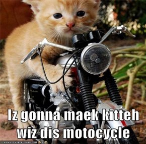 Iz gonna maek kitteh wiz dis motocycle