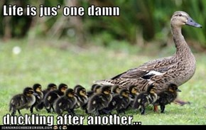 Life is jus' one damn  duckling after another...