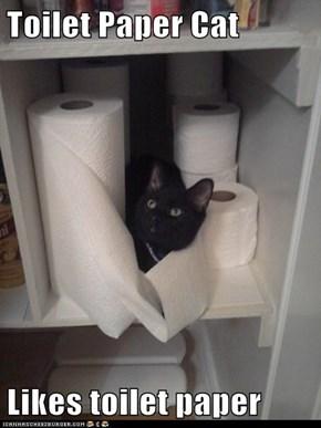 Toilet Paper Cat  Likes toilet paper