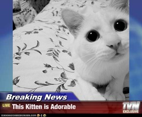 Breaking News - This Kitten is Adorable