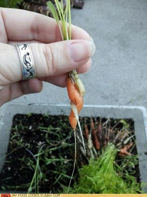 Hold Me, Carrot