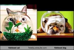 fishbowl cat Totally Looks Like fishbowl dog