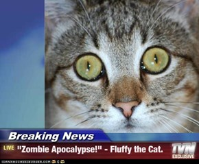 "Breaking News - ""Zombie Apocalypse!"" - Fluffy the Cat."