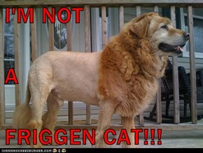I'M NOT  A FRIGGEN CAT!!!