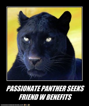 PASSIONATE PANTHER SEEKS FRIEND W BENEFITS