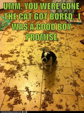 UMM, YOU WERE GONE. THE CAT GOT BORED.  I WAS A GOOD BOY, PROMISE.