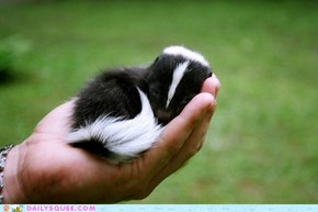 Squee Spree: Tiny Handful