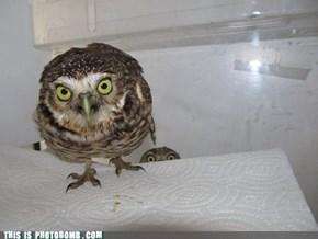 Whoooo's There