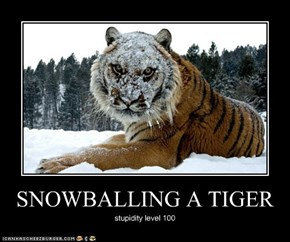 SNOWBALLING A TIGER