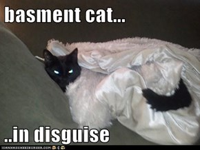 basment cat...  ..in disguise