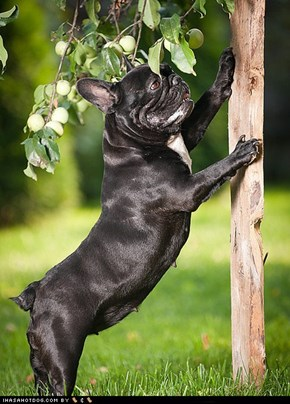 Goggie ob teh Week: Barking Up the Tree