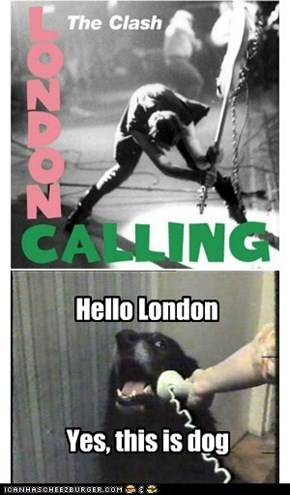 When London calls Dog