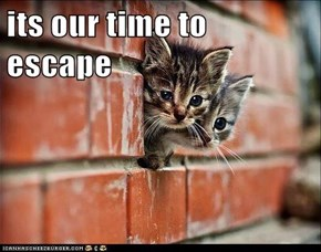 its our time to escape
