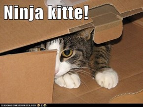 Ninja kitte!