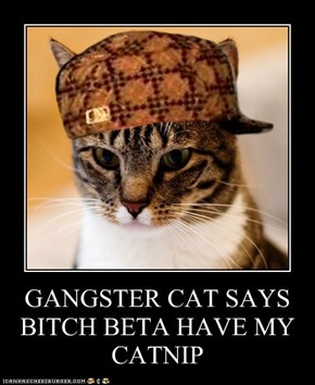 GANGSTER CAT SAYS BITCH BETA HAVE MY CATNIP