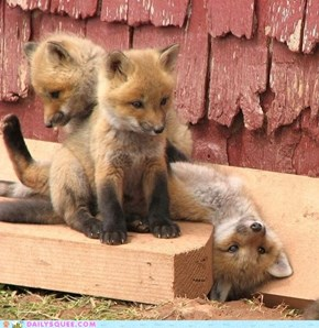 Foxy Trio