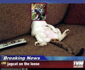 Breaking News - jagcat on the loose