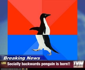 Breaking News - Socially backwards penguin is born!!