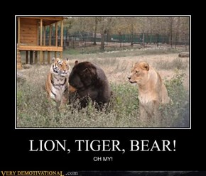 LION, TIGER, BEAR!