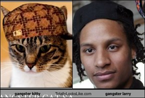 gangster kitty Totally Looks Like gangster larry