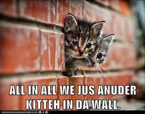 ALL IN ALL WE JUS ANUDER KITTEH IN DA WALL.