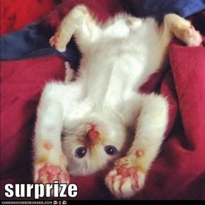 surprize