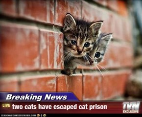Breaking News - two cats have escaped cat prison
