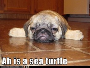 Ah is a sea turtle