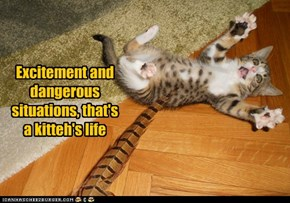 Excitement and dangerous situations, that's a kitteh's life