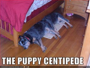 THE PUPPY CENTIPEDE