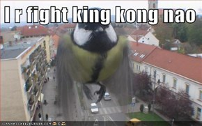 I r fight king kong nao