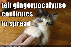 teh gingerpocalypse continues to spread