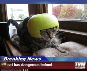Breaking News - cat has dangerous helmet