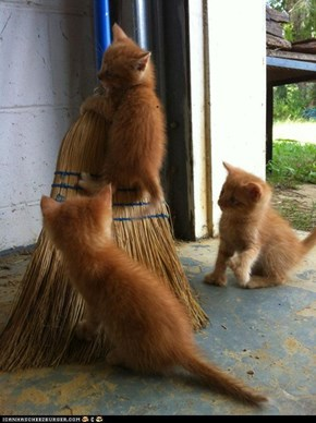 Cyoot Kittehs of teh Day: Itteh Bitteh Broomstick Committeh