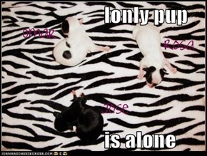lonly pup                          is alone