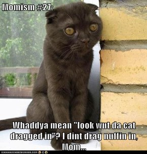 "Momism #27:  Whaddya mean ""look wut da cat dragged in""? I dint drag nuffin in, Mom..."