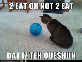2 EAT OR NOT 2 EAT  DAT IZ TEH QUESHUN